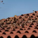 Dach mit Laub